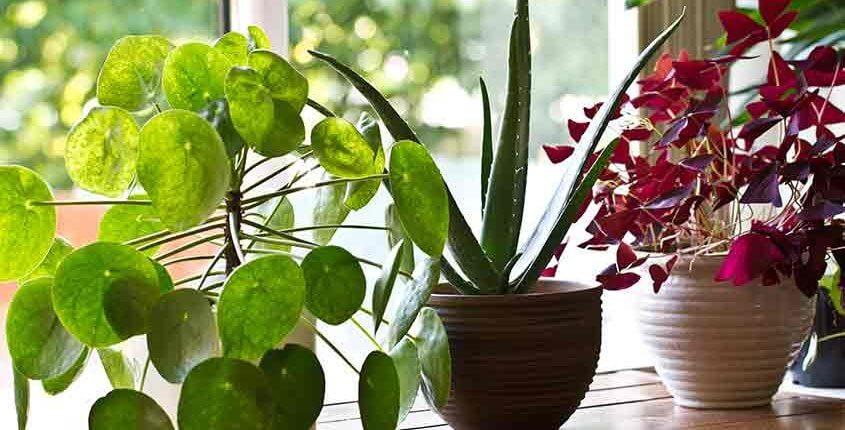 Plantes millor que plàstics
